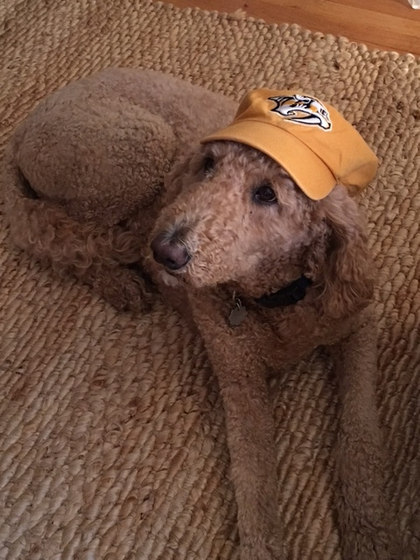 John Ray Clemmons' dog wears a Nashville Predators hat.
